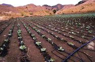 Better Fertilizer for Drip Irrigation Systems