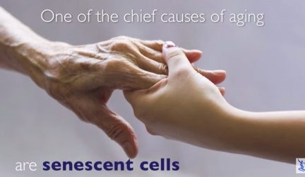 Oisin and OncoSenX Antiaging Extends Life 20% Life Extension in Old Mice and Human Clinical Trial Early 2020